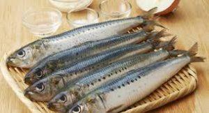 پودر ماهی کیلیکا