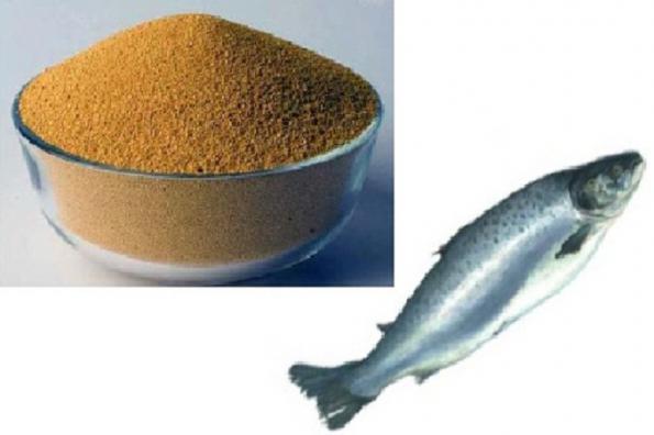 نمایندگی پودر ماهی شمال